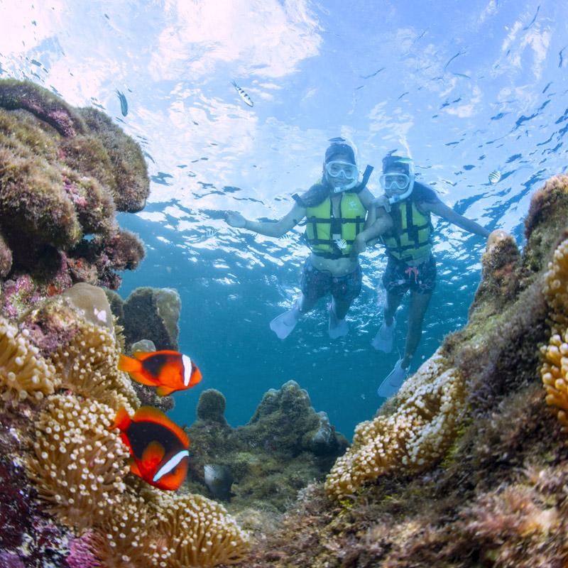 サンゴとお魚シュノーケル